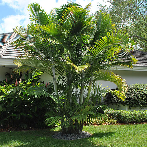Tropicalway East Landscaping Services in Miami, FL